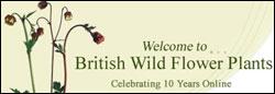 British Wild Flower Plants